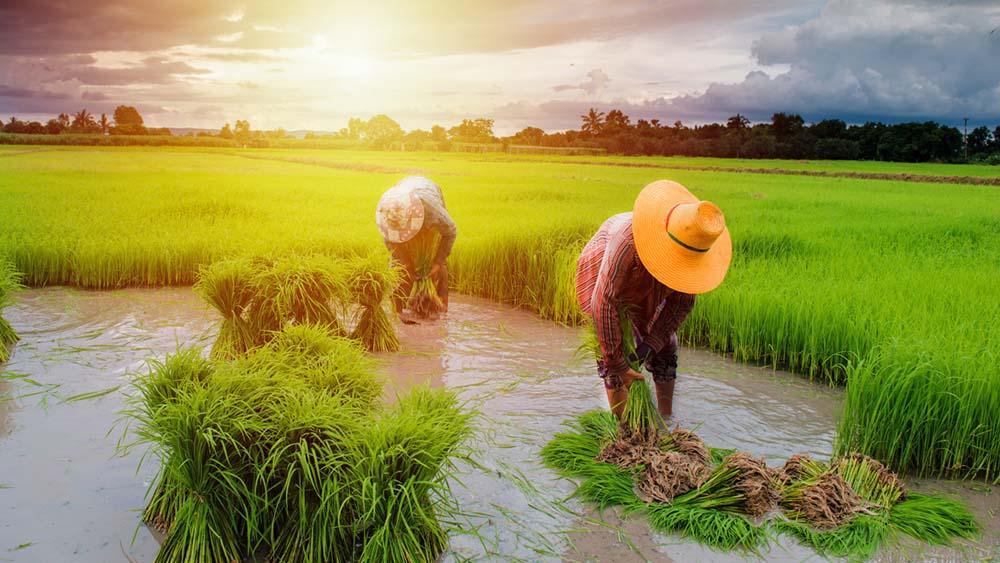 จะลงทุนการเกษตร ต้องรู้