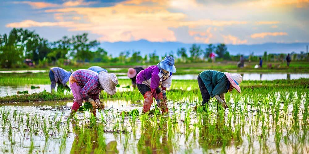 4 เรื่องต้องรู้ ก่อนลงทุนทำการเกษตร